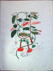 Salvador Dali - Flora Dalinae (FlorDali) - Pisum Sensuale (Cobea, Les Levres, Lips)