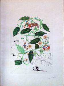 Salvador Dali - Flora Dalinae (FlorDali) - Passiflor Lauarigers (Le Vine, Passion Flower)