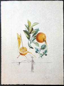 Salvador Dali - FlorDali (Les Fruits) - FlorDali Grapefruit
