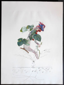 Salvador Dali - FlorDali (Les Fruits) - FlorDali Raspberry