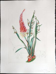 Salvador Dali - Surrealsitic Flowers, Florals - Stock Rhinos, F