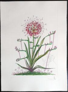 Salvador Dali - Surrealsitic Flowers, Florals - Cactus Les Bequilles, I
