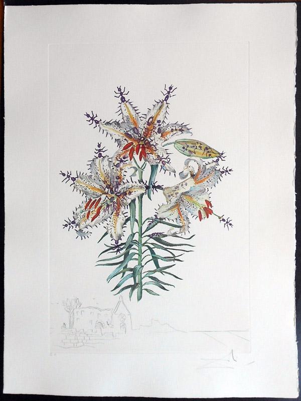Salvador Dali - Surrealsitic Flowers, Florals - Lily + Ants, K